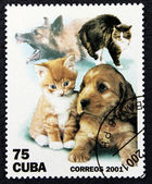 Postage stamp with the image of a cat and dog (puppy and kitten) — Стоковое фото