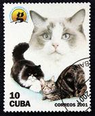 γραμματόσημο με την εικόνα του ένα γάτες — Φωτογραφία Αρχείου