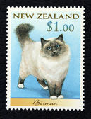Postage stamp with the image of a cat Birman breed — Stock Photo