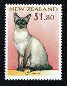 Postage stamp with the image of a cat Siamese breed — Stock Photo