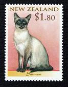Postzegel met de afbeelding van een kat siamese ras — Stockfoto