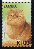 почтовая марка с изображением порода персидская красная. — Стоковое фото