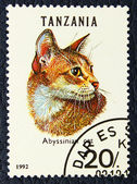 Postage stamp with the image of the cat abyssinian breed. — Stock Photo