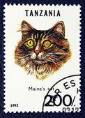 Postzegel met de afbeelding van de kat. — Stockfoto