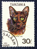 Postage stamp with the image of the cat Havana breed. — Stock Photo
