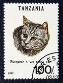 猫の欧州銀平織り品種のイメージで郵便切手. — ストック写真