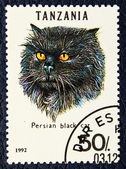 Postage stamp with the image of the cat black persian breed. — Foto de Stock