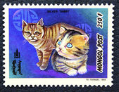 Postage stamp with the image of the cat silver tabby breed. — Stock Photo