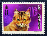 Postage stamp with the image of the cat red persian breed. — Stock Photo