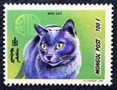 猫のイメージで郵便切手. — ストック写真