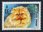 Postage stamp with the image of the cat persian breed. — Stock Photo