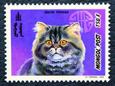 Postage stamp with the image of the cat smoky persian breed. — Stock Photo
