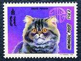 Postzegel met de afbeelding van de kat rokerige perzisch ras. — Stockfoto