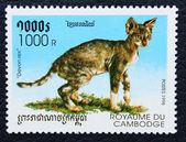 Estampilla con la imagen del gato de raza rex — Foto de Stock