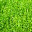 Lawn grass — Stock Photo #29740743