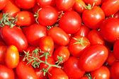 Czerwone pomidory — Zdjęcie stockowe