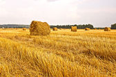 Hay in a field — Stock Photo