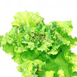 Stock Photo: Leaves of vegetable salad isolated