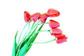 Bouquet of seven red tulips isolated — Stockfoto