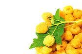 Ripe yellow raspberry — Stock Photo
