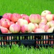 Red and yellow apples in a plastic box — Stock Photo