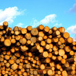 Stock Photo: Many of pine and spruce logs in logging