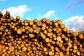 Muitos dos pinheiros e abetos registros em log — Fotografia Stock