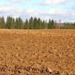 Stock Photo: Plowed field prepared for sowing winter crops