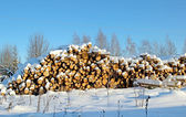 Harvesting timber logs in a forest in Russia — Stock Photo
