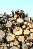 Logs in the logging — Foto Stock