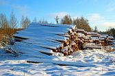 Winter timber harvesting — Stock Photo