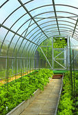 Vegetables in greenhouse — Stock Photo