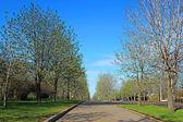 Aleja kasztanowców w parku zwycięstwa w Moskwie — Zdjęcie stockowe