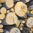 Stock Photo: Sawn birch logs at sawmill