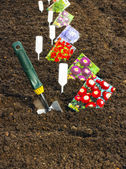 Sowing seeds in the soil in the garden — Stock Photo
