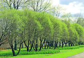 City park in early spring — Stock Photo