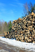 Logs in the logging in Russia at winter — Stock Photo