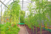 Vegetable greenhouses made of transparent polycarbonate  — Stock Photo