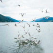 Stock Photo: Norway, Fjord, gulls
