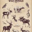 Vintage set of wild animals — Vector de stock