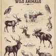 Vintage set of wild animals — Stok Vektör