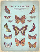 Vintage colorful butterfly illustrations — Stok Vektör