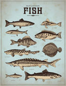 Set of vintage fishes — Stock Vector