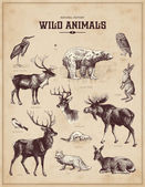 Vintage set of wild animals — Cтоковый вектор