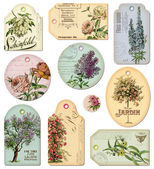 Vintage tags - flowers — Foto de Stock