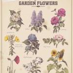 Florist's placard set — Stock Vector
