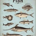 Sea set - fish — Stock Vector #49208379