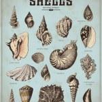 Shells set — Stock Vector #49208391