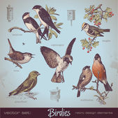 Vintage set of birds — Vector de stock