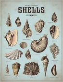 Shells set — Vector de stock